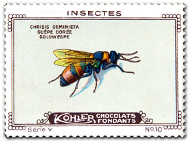 Kohler Chocolates of Switzerland, 1920 - Chrysis semicincta