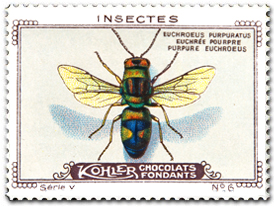 Kohler Chocolates of Switzerland, 1920 - Euchroeus purpuratus