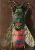 W.Linsenmaier, Insects of the World