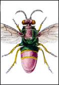 Pierre Jean François Turpin in: V. Batelli, 1831 - Dizionario delle scienze naturali