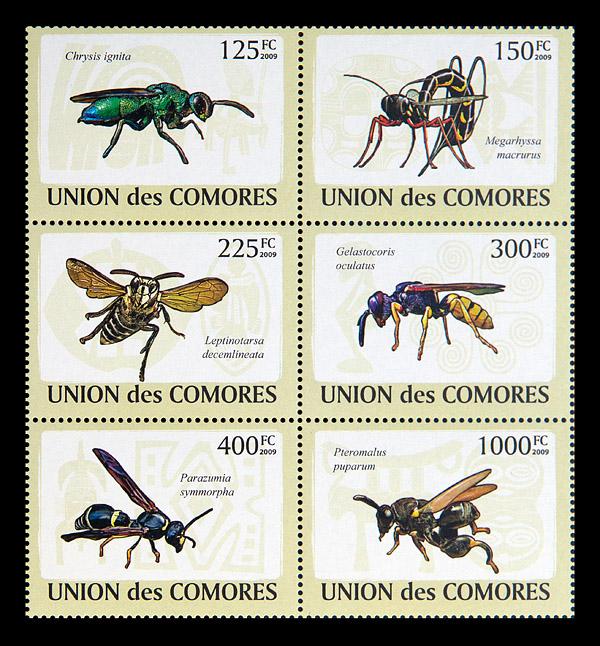 Union des Comores, 2009