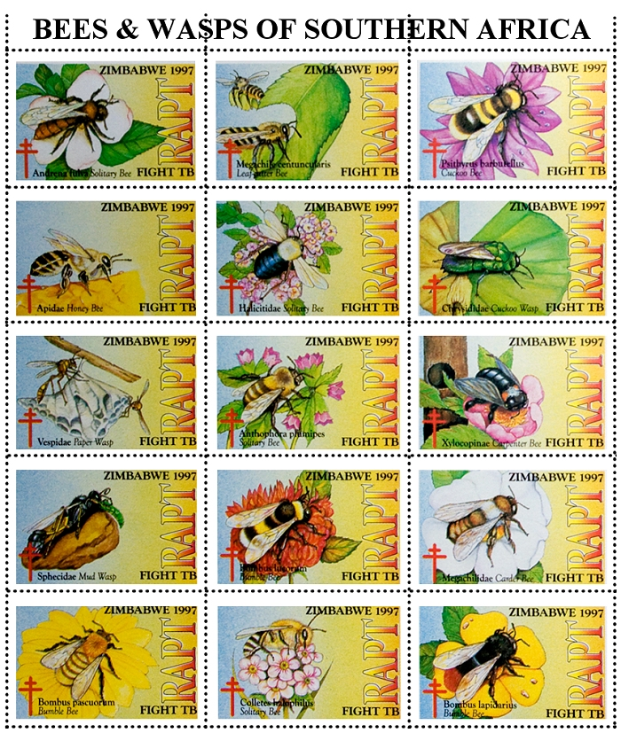 Zimbabwe, 1997: RAPT, Bees and Wasps of Southern Africa
