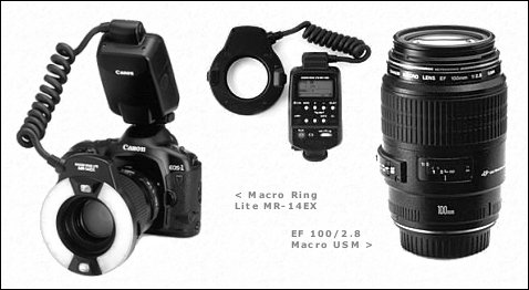 Canon Macro Ring Lite MR-14EX & EF 100/2.8 Macro USM