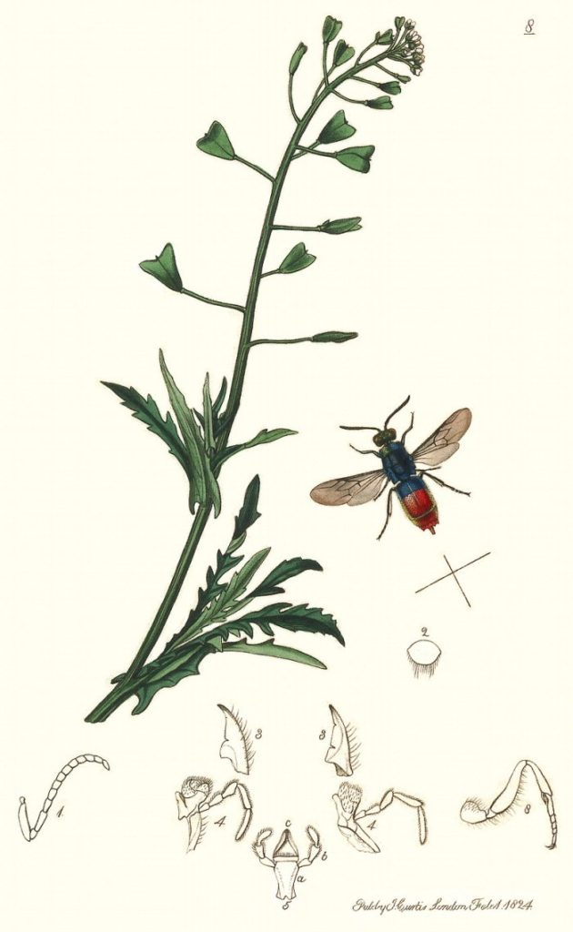 J. Curtis, 1824 - British Entomology