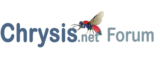 Search Chrysis.net Forum for Praestochrysis megerlei